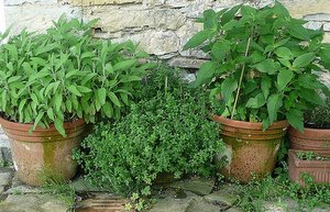 herbs in containers 2