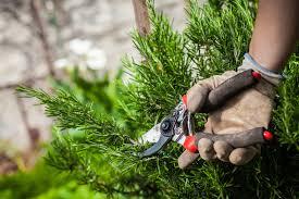 herb pruning