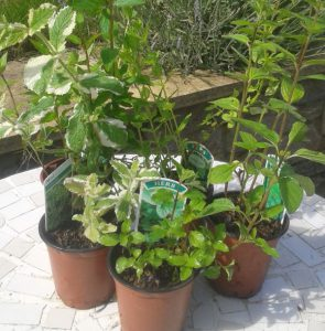 mail order herbs for sale