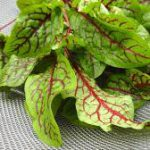Red Vein Sorrel leaves